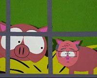 En Guatemala cerdo con rasgos humanos causa impacto