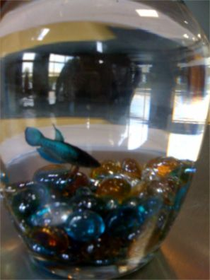 South Park Office Fish