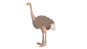 animals-ostrich.png?height=98