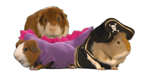guinea-pigs.png?height=165
