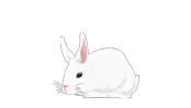 non-human-wild-animals-bunny.png?height=98