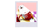 other-pets-parishilton-dead-pet-photos-scrambles.png?height=98