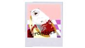 other-pets-parishilton-dead-pet-photos-scrambles.png?height=98