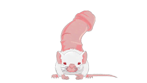 penis-mouse.png?height=165