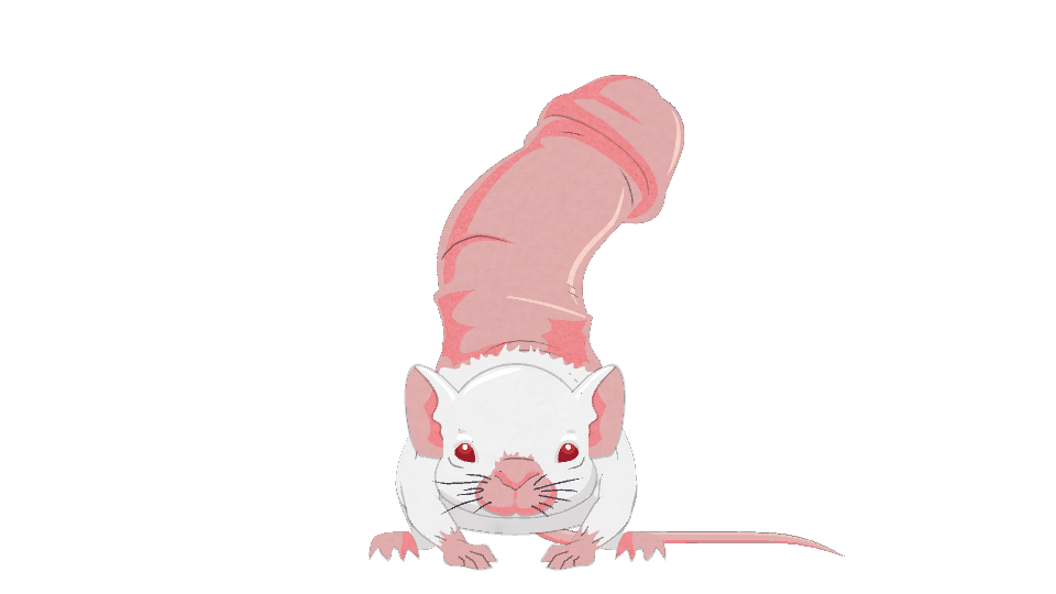 penis-mouse.png